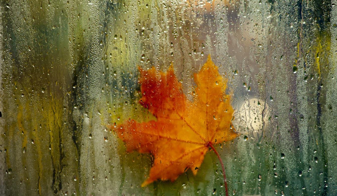autumn window leaf rain drops